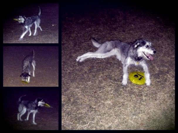 Nighttime Frisbee at the Dog Park