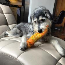 Sasha Enjoying a Toy