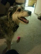 Sasha's 1st Rover stay 1