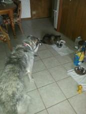 Sasha's 1st Rover stay 4